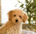 アジソン病で犬の場合の寿命と食事の注意点!薬代を抑えるコツも